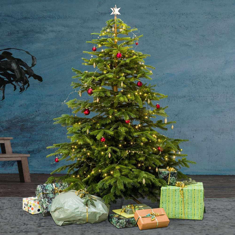 Der Premium-Weihnachtsbaum